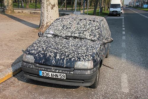 мръсна кола